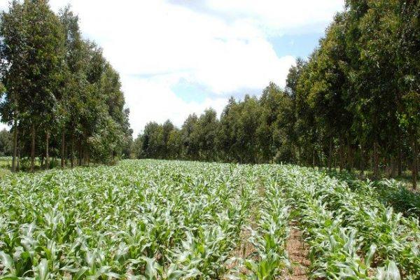 Comprovada mitigação de gases de efeito estufa por integração de culturas