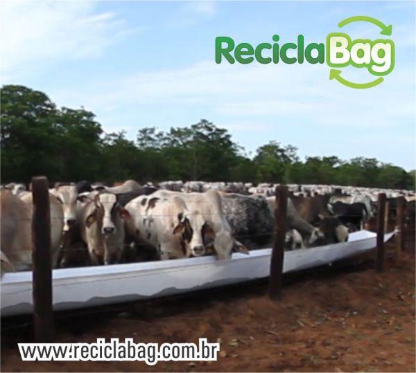 Propriedades de Mato Grosso recebem avaliação de livre de aftosa