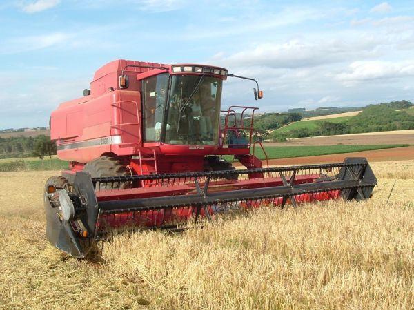 Confira as cotações dos 4 principais produtos agropecuários de MT