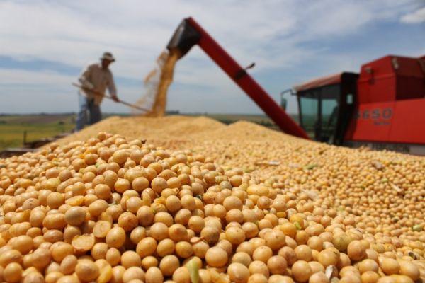 Farelo de soja tem valorização nos EUA e eleva preço do grão em MT